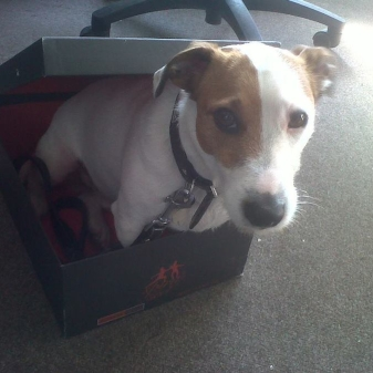 Rocky the Deathouse Dog chilling out in his very own Jeffery-West shoe box.