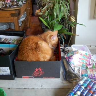Hattie - Post Christmas Nap in Jeffery-West Shoe Box. Purrfect!